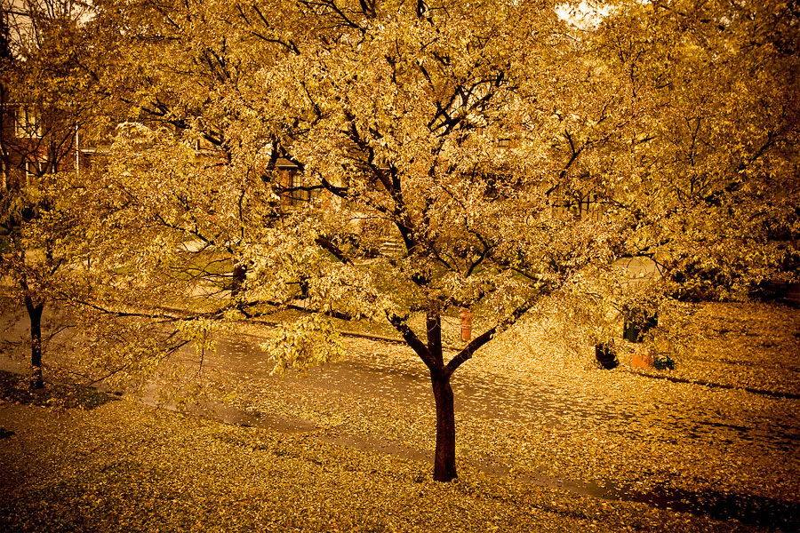 fall Goodbye Fall, Hello Website