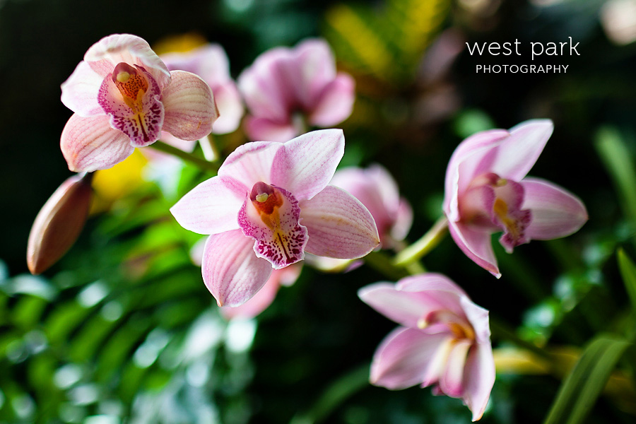 Friday Flora:  Anna Scripps Whitcomb Conservatory