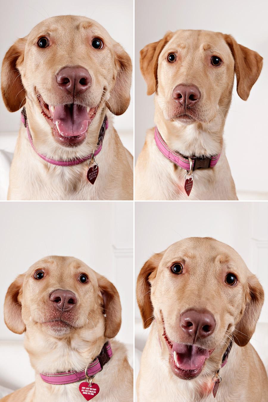 awkward dog portraits02 Awkward Dog Portraits