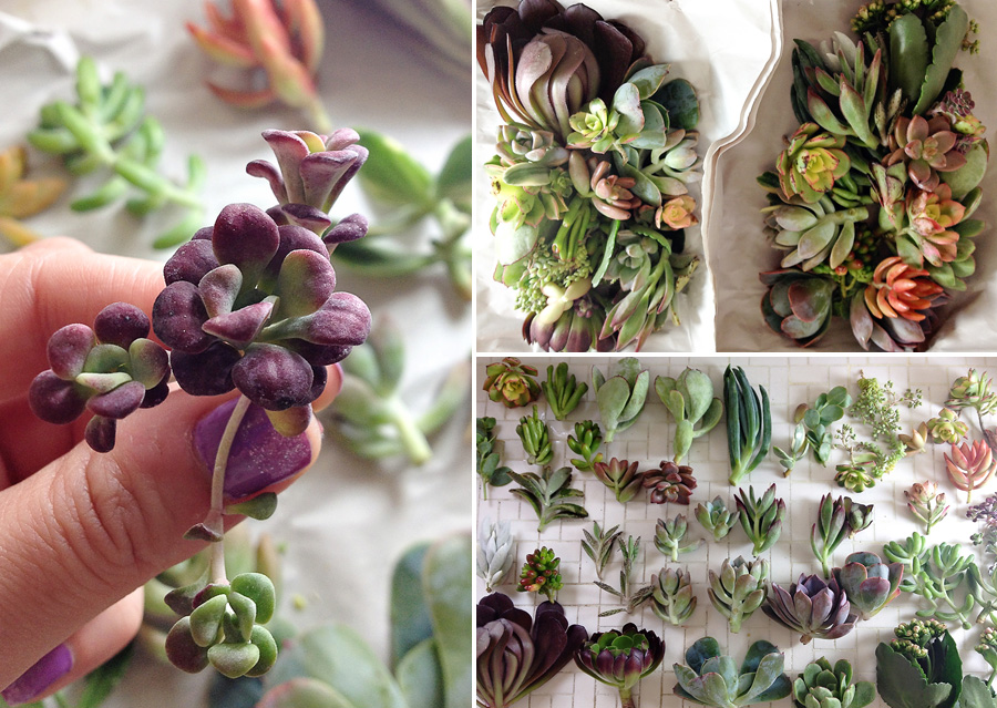 succulents 04 Wedding Trend: Succulents